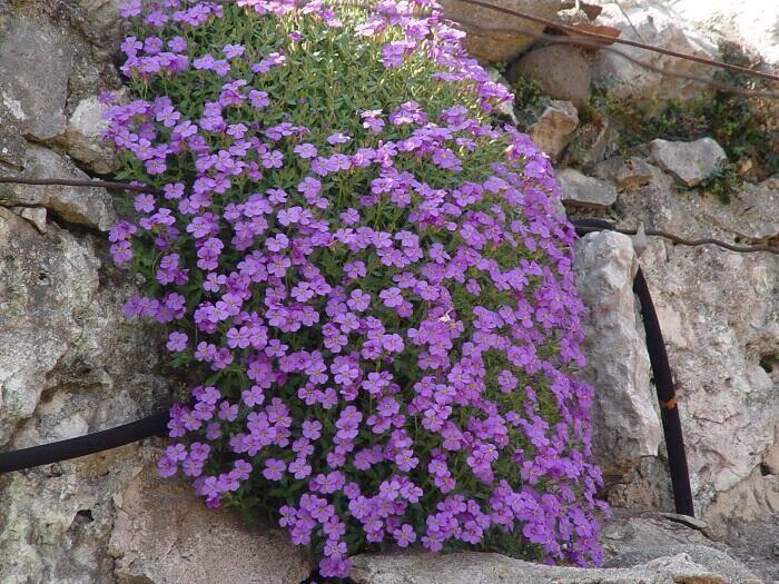 Monte baldo nordic walking natura e paesaggio - Immagini giardini rocciosi ...
